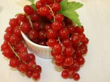 Red Versailles Redcurrant Bush