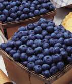 Coville Blueberry Bushes