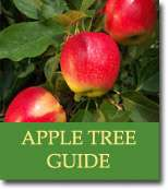 Buyers Guide for Apple Trees