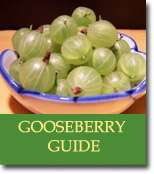 Buyers Guide for Gooseberries