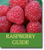 Buyers Guide for Raspberries