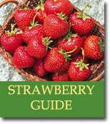 Buyers Guide for Strawberries