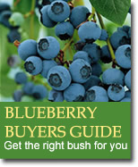 Buyers Guide for Blueberries