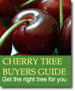 Buyers Guide for Cherry Trees