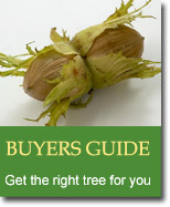 Buyers Guide for Cob Nuts & Filberts