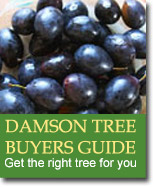 Buyers Guide for Damsons