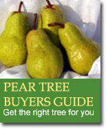 Buyers Guide for Pear Trees